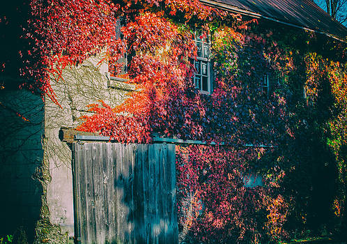 Ivy Covered Barn by James Canning