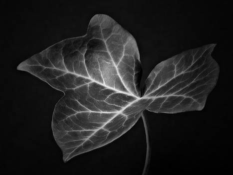 Black and White Flowers Macro Photography Art Work by Artecco Fine Art Photography
