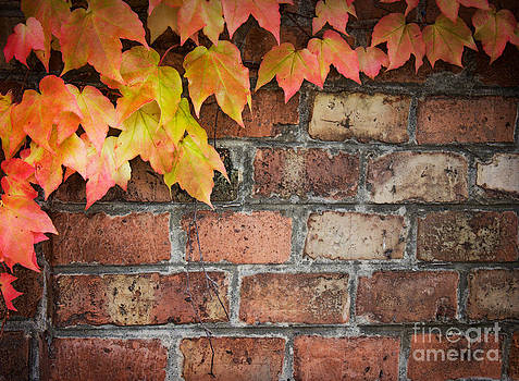 Mythja  Photography - Ivy over brick wall