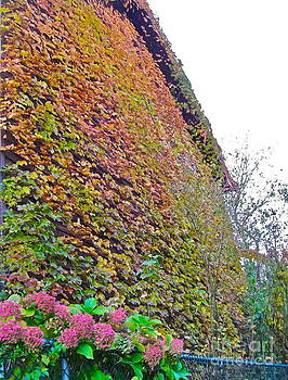 Ivy Wall by Linda Zolten Wood