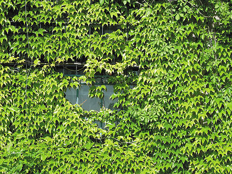 Ivy Window 2 by The Art of Marsha Charlebois