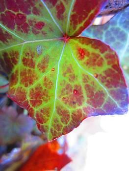 Ivys Kiss by Lynn Dodds