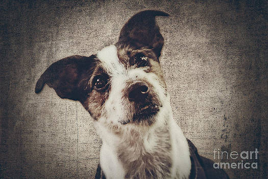 Angela Doelling AD DESIGN Photo and PhotoArt - Jack Russel Terrier