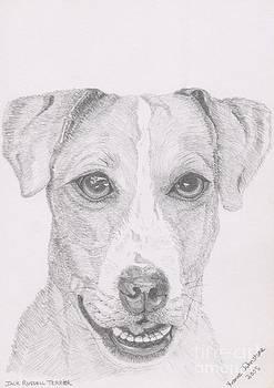 Jack Russell Terrier by Yvonne Johnstone