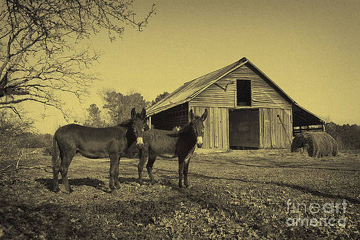 Jacks At The Barn by Russell Christie