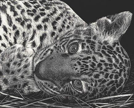 Jaguar Cub by Elizabeth R Smith