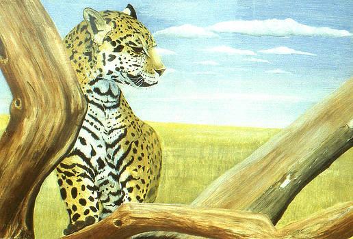 Jaguar by David Paterson