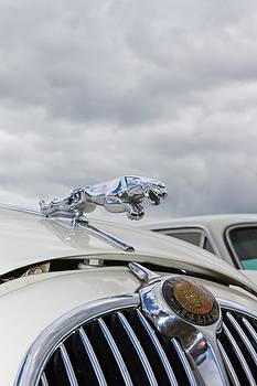 Fizzy Image - Jaguar
