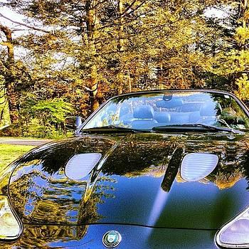 Jaguar In The Fall. #fall #beautiful by J Amadei