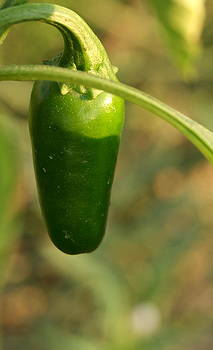 Jalapeno Pepper by Michelle Cawthon