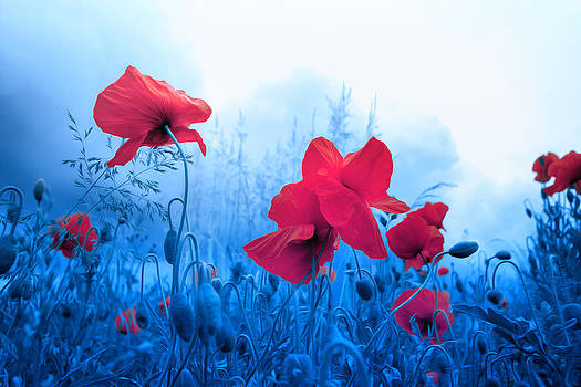 Jam with Poppies by Philippe Sainte-Laudy