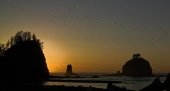 James Island Sunset and Birds by Greg Reed