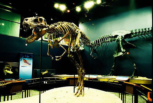 Jane the t-rex by Joshua M Schreiber