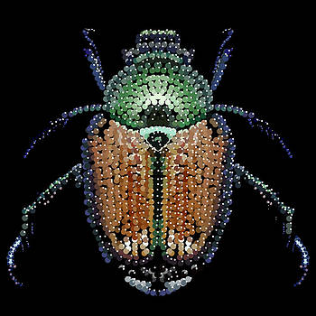 Japanese Beetle Bedazzled by R  Allen Swezey