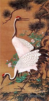 Roberto Prusso - Japanese Cranes