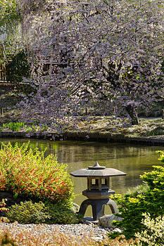 David Hahn - Japanese Gardens