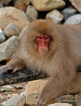 Japanese Macaque in Jigokudani by Natural Focal Point Photography