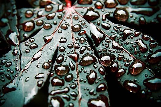 Dark Rain by Judd Connor
