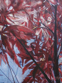 Japanese Maple by Sheila Holland