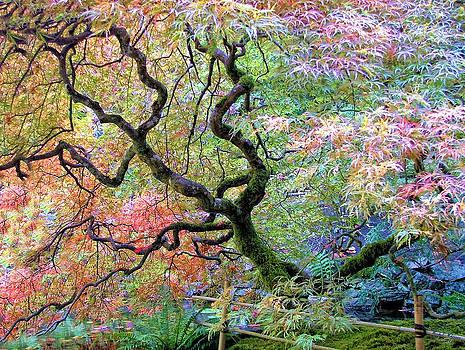 Japanese Maple by Wendy McKennon