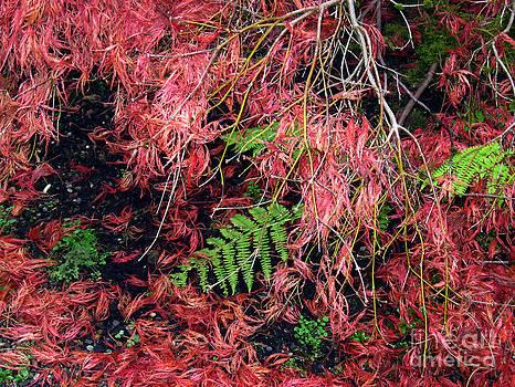 Ellen Miffitt - Japanese Maples Leaves carpet the soil