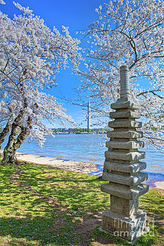 David Zanzinger - Japanese Stone Pagoda Cherry Blossom trees Washington DC