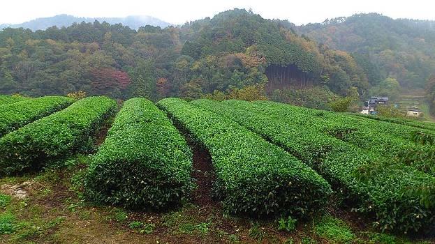 Japanese tea garden by Yoshikazu Yamaguchi