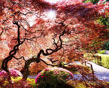Jappanise garden by Benny Ventura