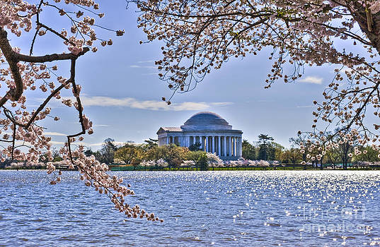 David Zanzinger - Jefferson Monument Spring Cherry Blossoms Tidal Basin Washington DC