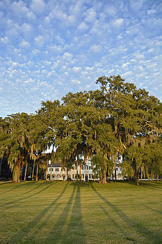 Jekyll Island Crane Cottage Lawn Shadows by Bruce Gourley