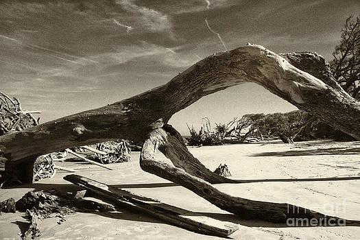 Jekyll Island Monster by Bob McGill
