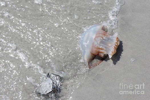 Jelly Ball and Oyster Shell Washed Upon NC Beach by Crissy Anderson