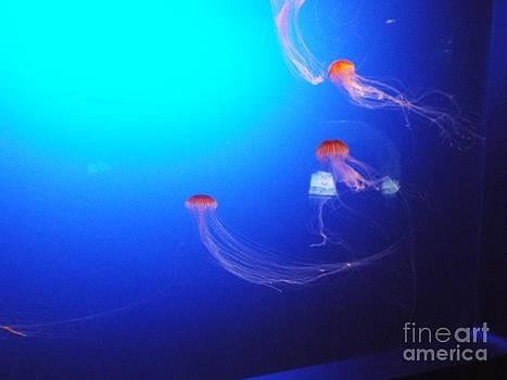 Jelly fish 1 by John Morris