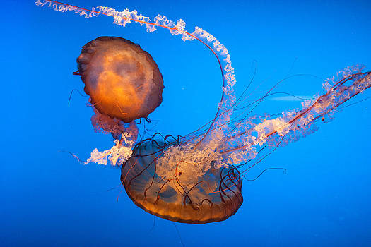 Jellyfish Dance by Dawn Romine