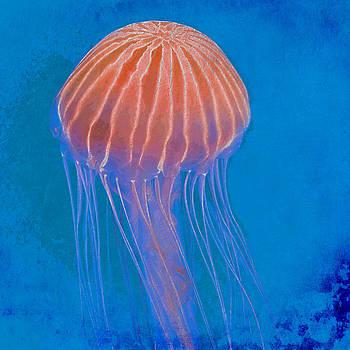 David Pringle - Jellyfish
