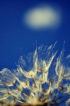 Jellyfish In The Sky by Bajan Sorin