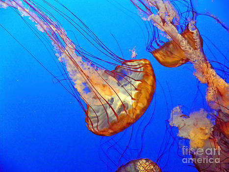 Elizabeth Hoskinson - Jellyfish IV
