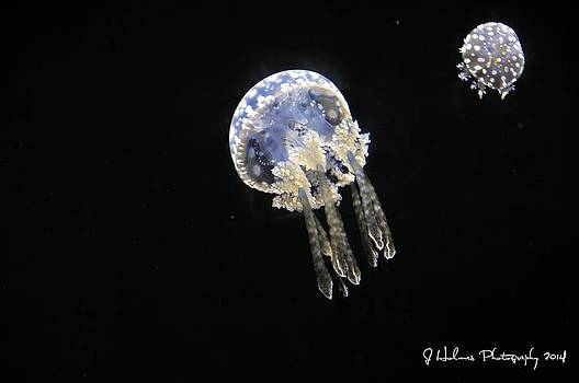 Jellyfish by Jerome Holmes