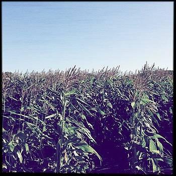 Jersey Fresh Corn, Yes We Got More. So by Deirdre Ryan