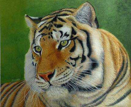 Jewel Eyed Tiger by Karen Sharp