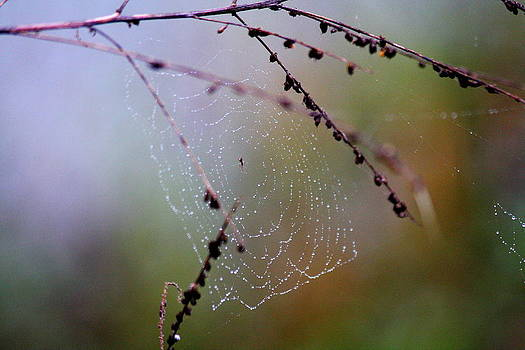 Jeweled Web by Anthony Wilder