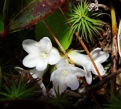 Dawn Hagar - Jewels on the forest floor