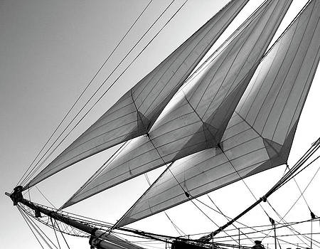 Jib Sails by David Doucot