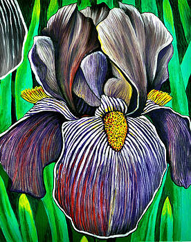 JoetteBearded Irise by Bob Crawford