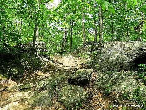 Jogging In Woods by Scott Schlaff