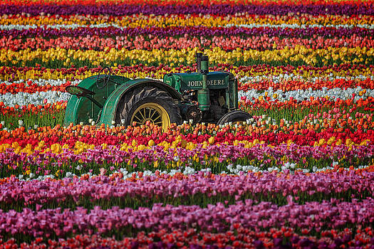 Wes and Dotty Weber - John Deere And A Few Tulips