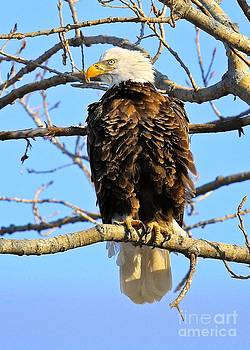 John's Eagle by John  Ruggiero