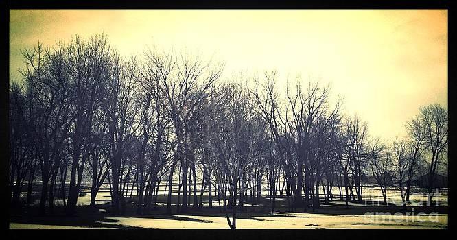 John's Trees by Garren Zanker