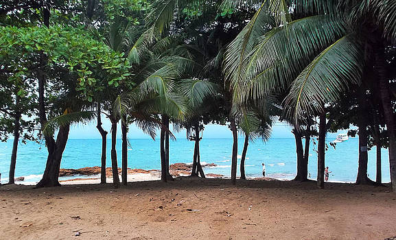 Jomtien Beach Trees 2 by Paul Rainwater