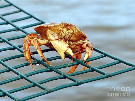 Christine Stack - Jonahs Crab on a Lobster Pot